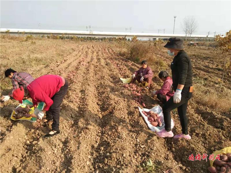 小红薯助农增收 1.png